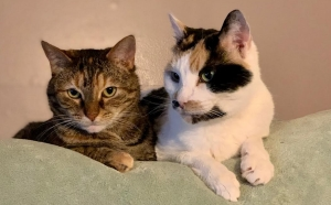 DCL Pet(s) of the Week: Meet Pansy and India