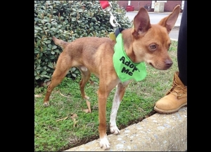 Humane Society's Pet of the Week: Meet Rocky