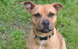DCL Pet of the Week: Meet Allie