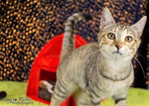 DCL Pet of the Week: Meet Rhubarb