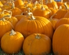 Fall Festivals: Northport Elementary School