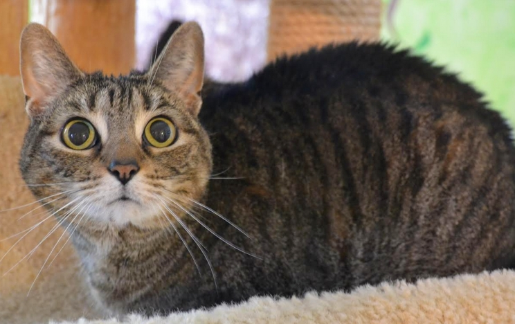 DCL Pet of the Week: Meet Shirley