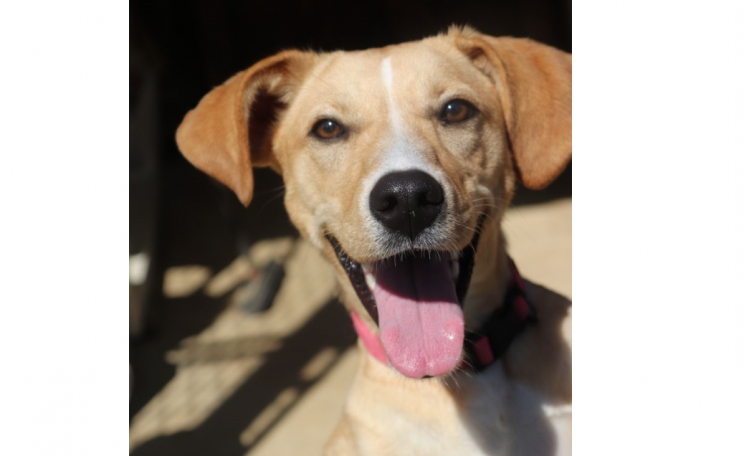 DCL Pet of the Week: Meet Cheyenne