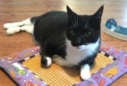Humane Society's Pet of the Week: Meet Tux