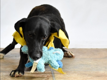 DCL Pet of the Week: Meet Julie