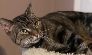 DCL Pet of the Week: Meet Samantha