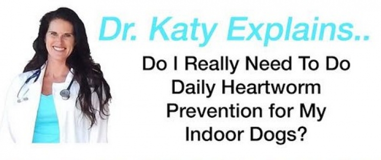 Ask Dr. Katy: Heartworm Prevention for Dogs