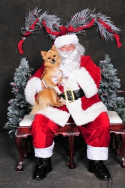 Want Fido's Photo with Santa? The Humane Society Can Make That Happen