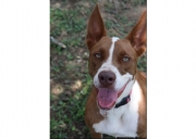 DCL Pet of the Week: Meet Chevy
