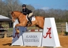 Honors: UA Equestrian Team Rider Competing as Cacchione Cup Qualifier at IHSA Nationals