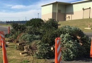 Live Christmas trees can be dropped off at the city of Tuscaloosa's Environmental Services Department facility on Kauloosa Avenue through Jan. 15.