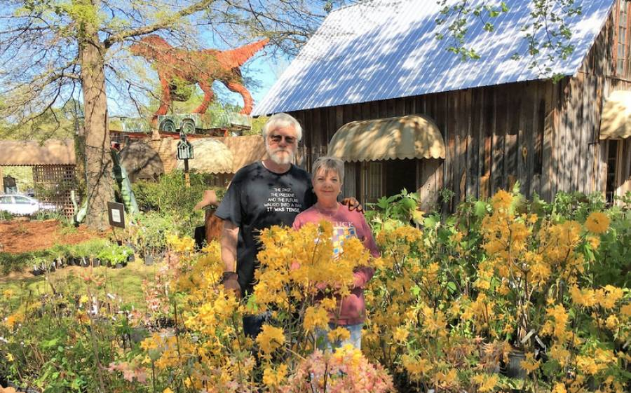 Members Charles Day and Mona Guin are almost hidden by the native azaleas offered at the 2017 native plant sale.