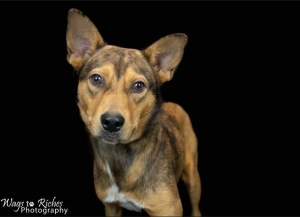 DCL Pet of the Week: Meet Mater