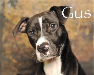 DCL Pet of the Week: Meet Gus
