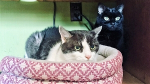 DCL Pet of the Week: Meet Zora and Sweet Pea