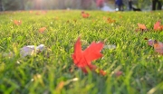 How Often Should You Fertilize Plants in the Fall?