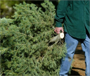 Want to Recycle Your Christmas Tree? Here's How!