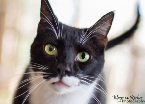 DCL Pet of the Week: Meet Tux