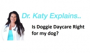 Ask Dr. Katy: Doggie Daycare Questions
