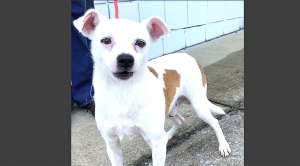 DCL Pet of the Week: Meet Mickey
