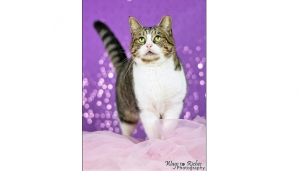 DCL Pet of the Week: Meet Missy