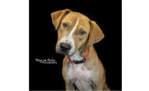 DCL Pet of the Week: Meet Tyson